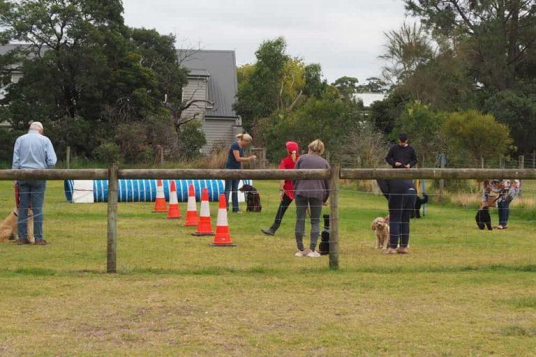 Mornington Dog Training 1