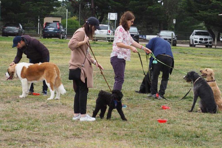 Mornington Dog Training 10