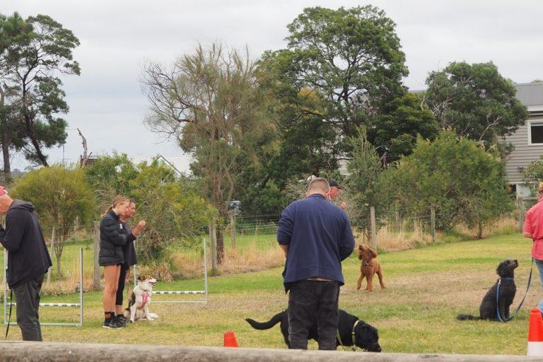 Mornington Dog Training 11
