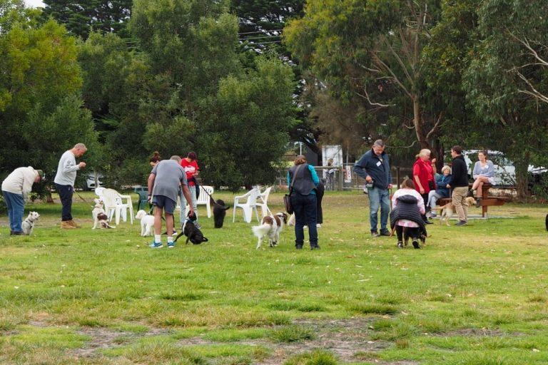 Mornington Dog Training 12
