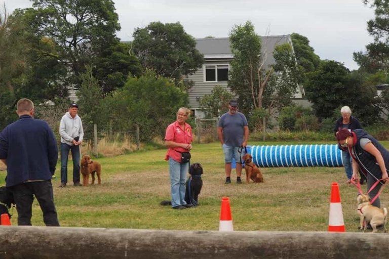 Mornington Dog Training 2