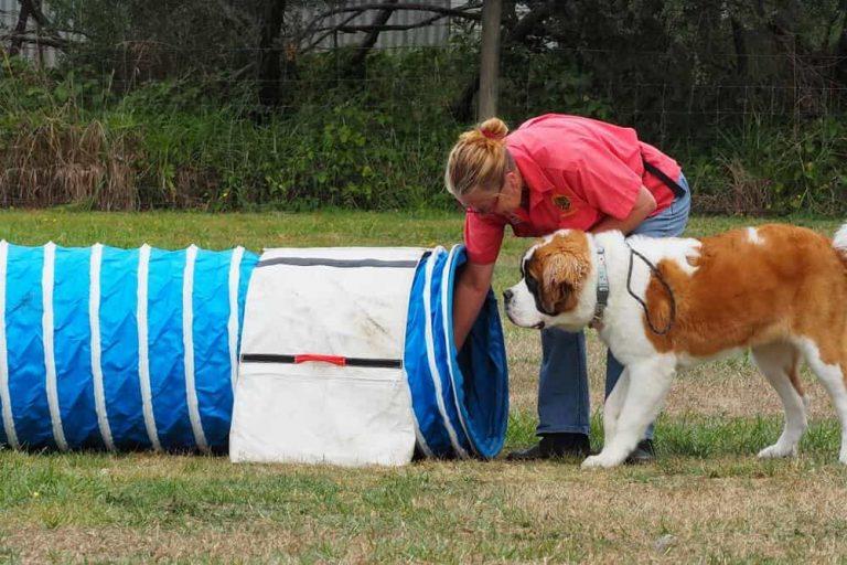 Mornington Dog Training 3