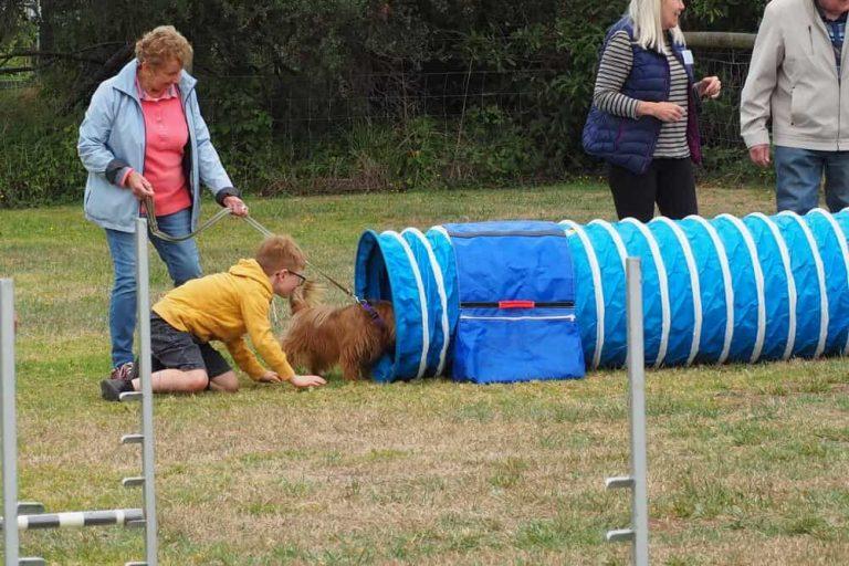 Mornington Dog Training 4