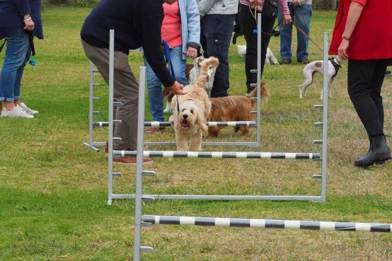Mornington Dog Training 5