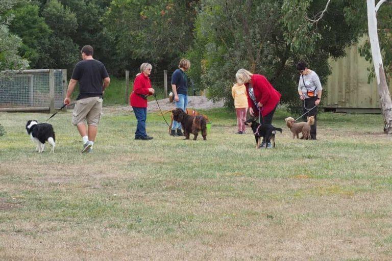 Mornington Dog Training 6