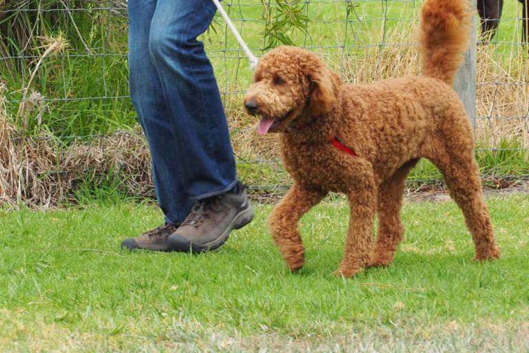 Mornington Dog Training 7