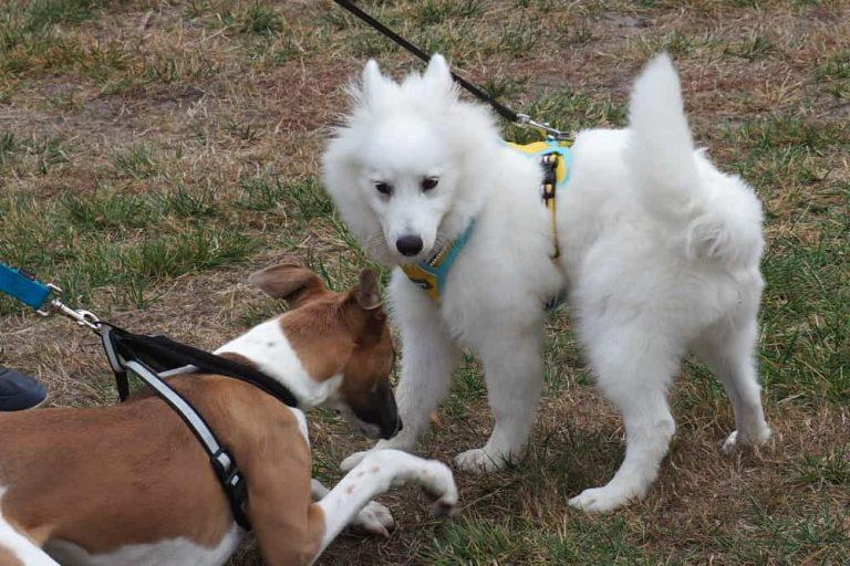Mornington Dog Training 8