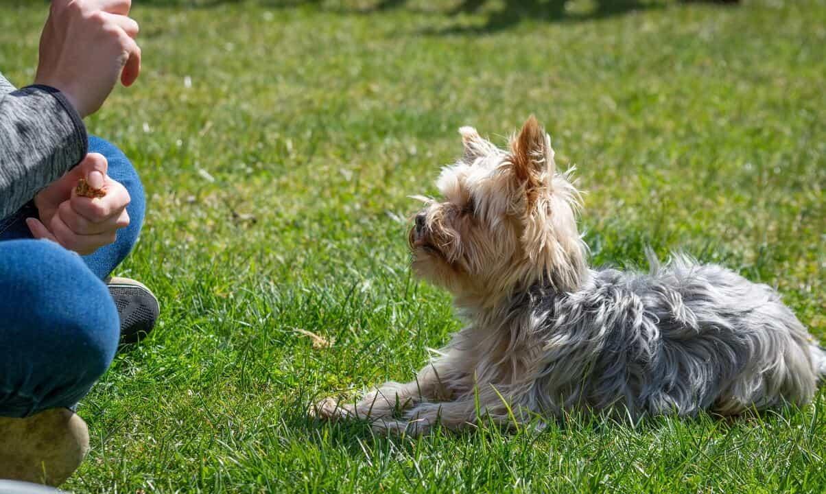 Mornington Peninsula Community Dog Club Dog Training